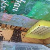 így tőgyelnek a méhek a kaptárban, mert melegük van (ha fejjel lefelé kerül be a kép, akkor a sárga tálka legyen a viszonyítás!)