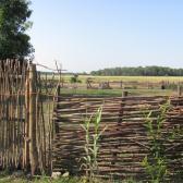 Fűzfavessző kerítés