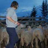 Gyorstalpaló a pásztorkodásról