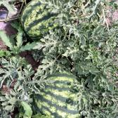 Egészséges termés