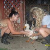 Orsolya - 2 nap - A csirkék ura!