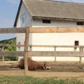 """Viktória - 2.nap - A lovak """"utánozós"""" állatok"""