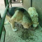 a kutyusok imádták