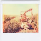 talajmintavételezés
