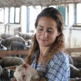 végre elkaptam egy kéthetes bárányt