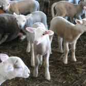 az ovisok részlege
