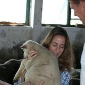 próbálom átemelni a vagy 12 kilós bárányt a karám falán