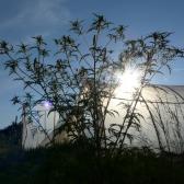 Süti a nap a fóliát