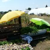 Répa és zöldségmosás