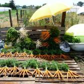 Megtisztított répák és zöldségek